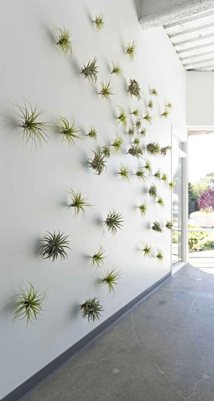 6 Creative Ideas For Displaying Air Plants In Your Home // Create A Feature…