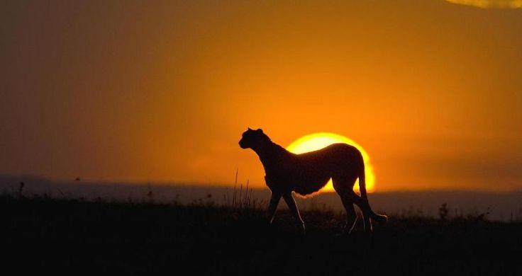 4 Days Maasai Mara | Tusafiri Africa Tours and Travels