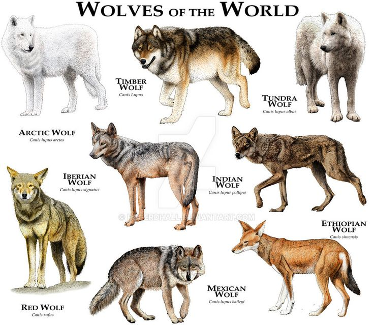 Wolves of the World by rogerdhall on DeviantArt