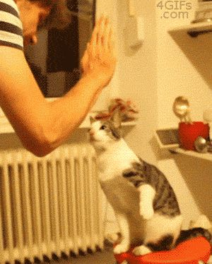 The Cutest High Five Cat (gif)