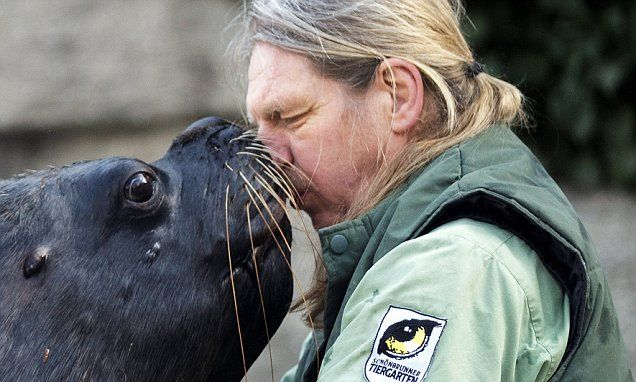 Sea lion puts on an amorous display of affection towards its keeper