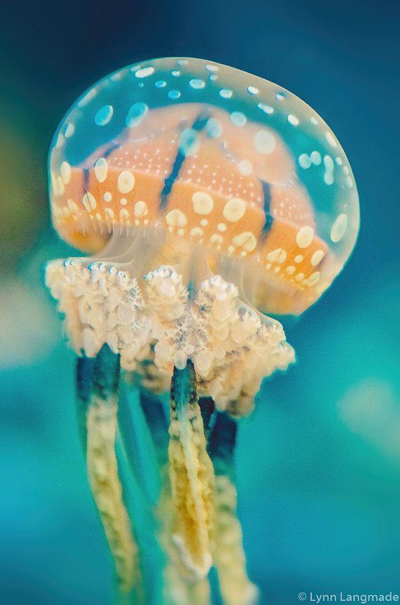 """Unterwasser-Fotografie - Orange getupft Quallen Unterwasser Ozean print Qualle Kunst blaugrün blauen Wand Dekor 5 x 7 8 x 10 11 X 14 16 x 24 """"Side-Kick"""
