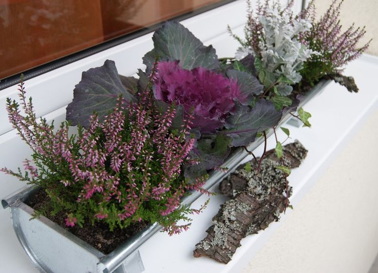 Fall winter balcony ideas balcony garden pinterest - Winter flowers for balcony ...
