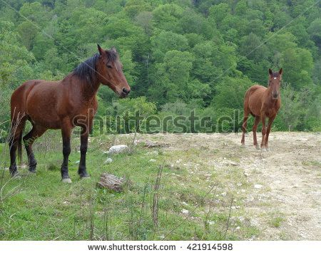 Adult and young horses on the road near green forest - stock photo