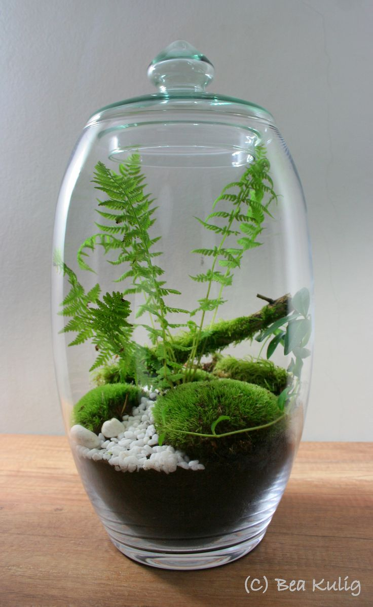 meandry natury terrarium pinterest pflanzen mini. Black Bedroom Furniture Sets. Home Design Ideas