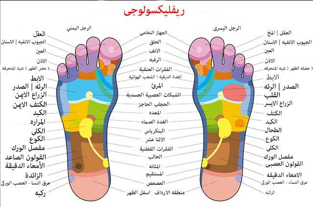 خريطه الارجل للعلاج بتدليك الريفليكسولوجى Foot Reflexology Reflexology Chart Reflexology Foot Chart