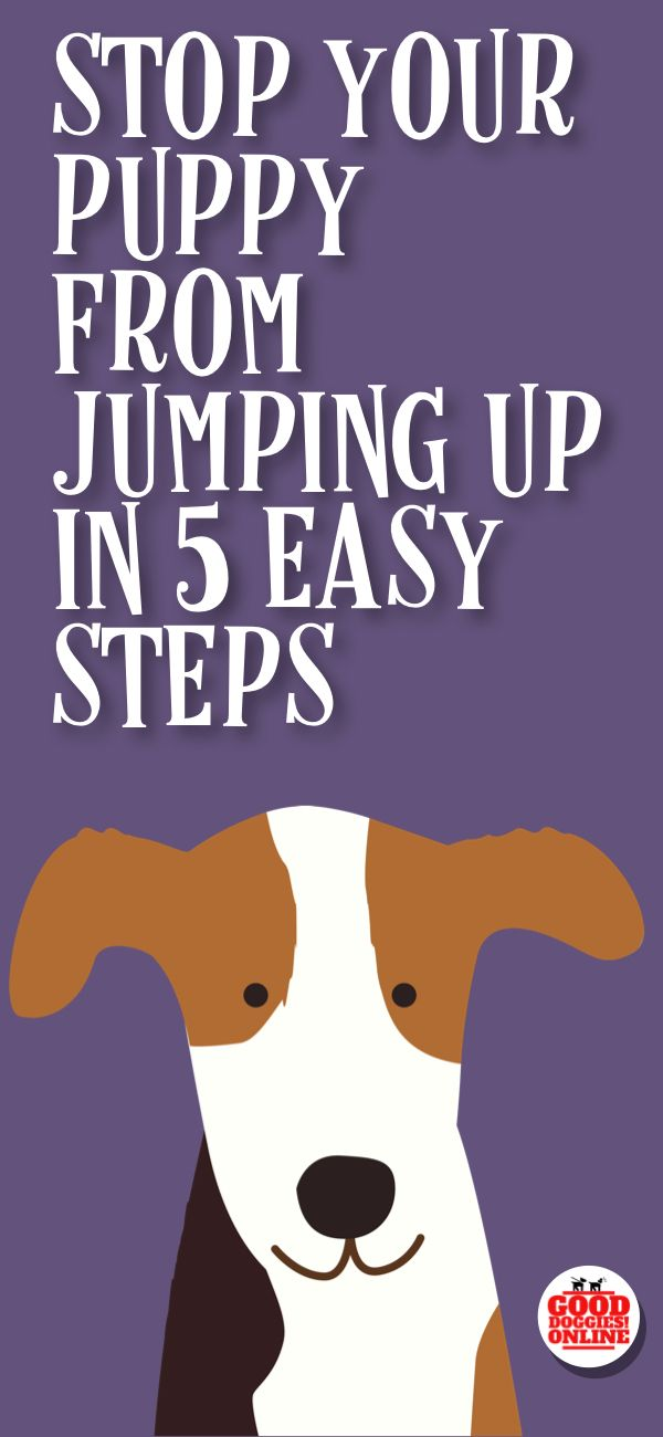 The puppy training tips are here to help you stop your puppy from jumping up, whether it's jumping on people, jumping on the couch, the bed or other furniture, or jumping up on walks, these dog training tips will help you with your new puppy.
