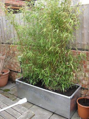 bamboo in metal trough planter | greengardenblog.comgreengardenblog.com