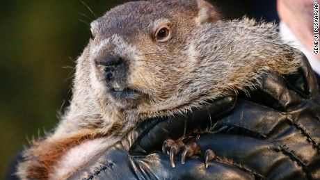 A New Hampshire police department has a rodent of interest in the recent snowfall troubles plaguing the Northeast: Punxsutawney Phil.