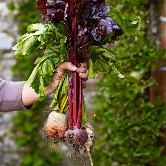 RT @MS_Living: How to plant a vegetable garden: The ultimate guide  http://pic.twitter.com/WIkERmh449