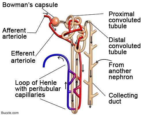 #Nephrology
