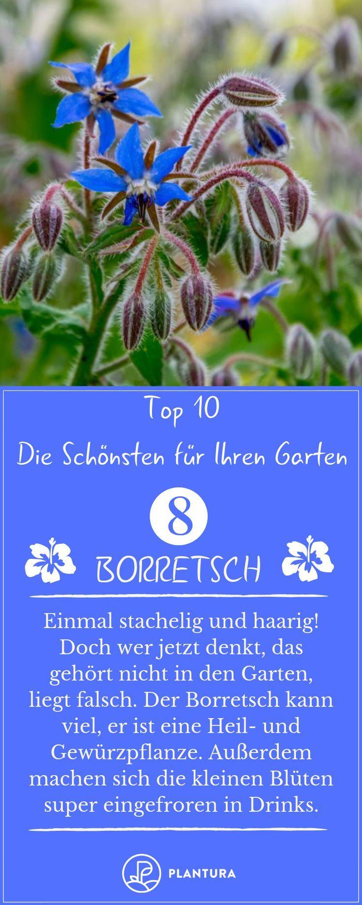 Sommerblumen: Die 10 Schönsten für Ihren Garten – Plantura   Garten Ideen & Tipps   Gemüse, Obst, Kräuter