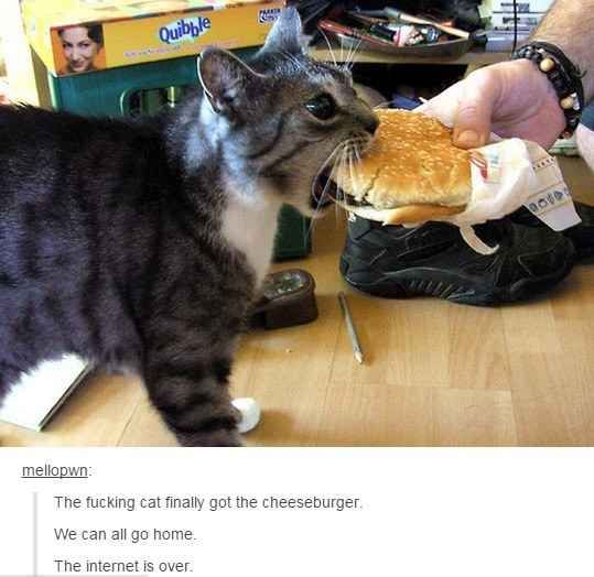 When the cat finally haz cheeseburger. Internet is over! OMFG! I'm dying right now!!!!!