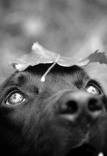 why not try gathering a black bag full of fallen leaves and empty it in your garden so your dog can play hunt in them from the safety of your garden