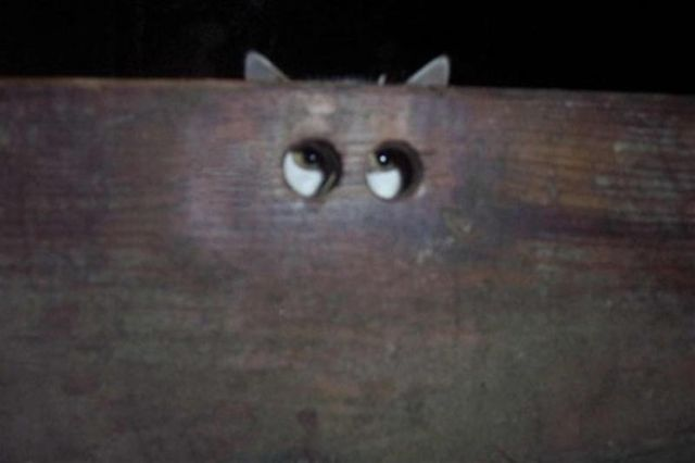 I want to imagine kitteh's friends have put charcoal around the holes and encouraged him to look through! ;) O_O