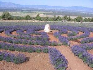 Mt. Shasta Lavender Farm's Labyrinth