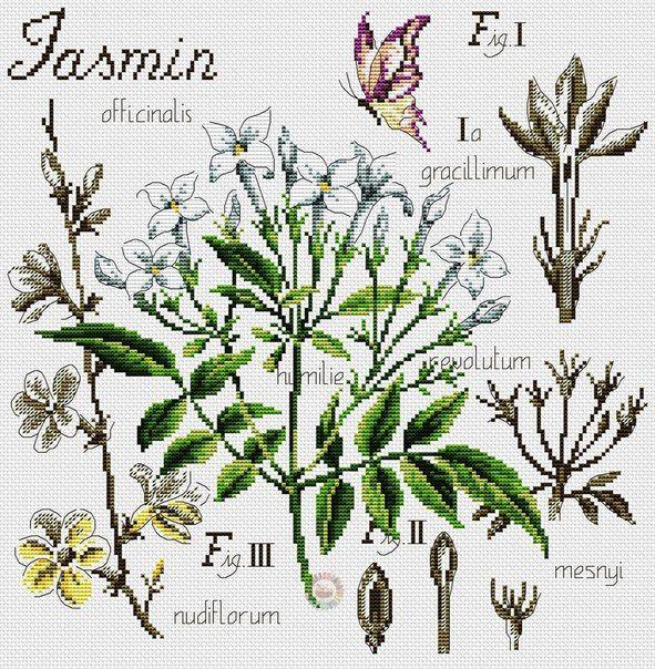 Схема вышивки крестом «Jasmin» Жасмин