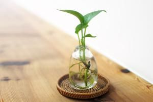 The 7 Best Houseplants for Low Light Conditions: Golden Pothos Vine