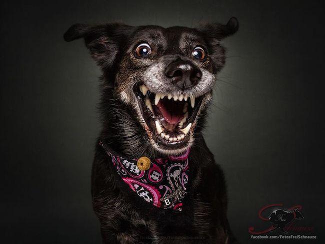 Забавные фотографии собак, ловящих лакомства (4)