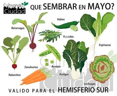 Qué sembrar en mayo en el hemisferio sur