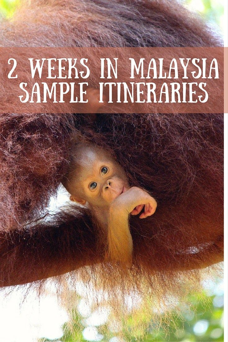 2 Weeks in Malaysia pinterest
