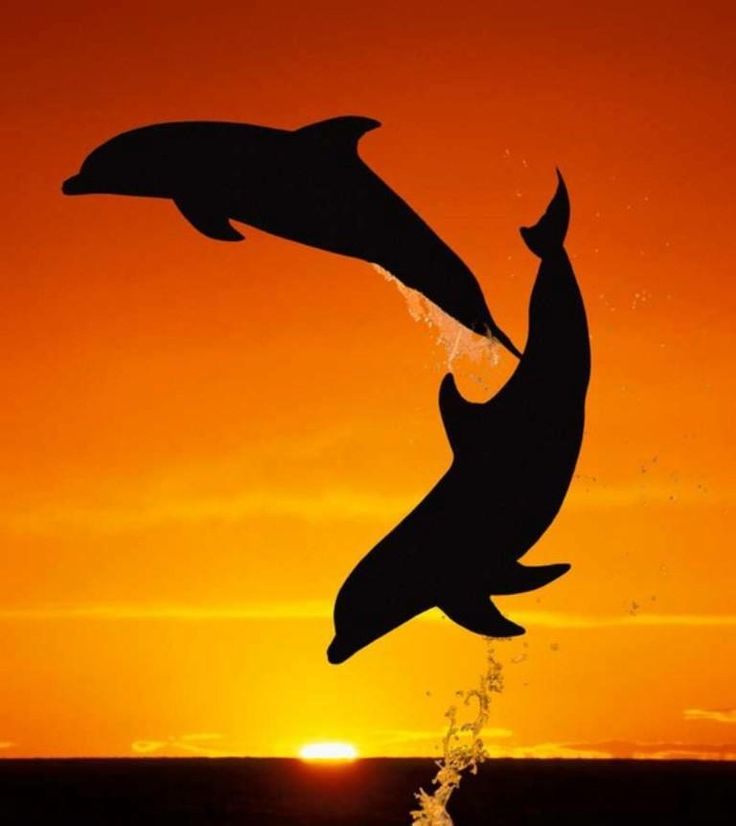 Jumping for joy: The dolphins which don't stop playing even when the sun goes…