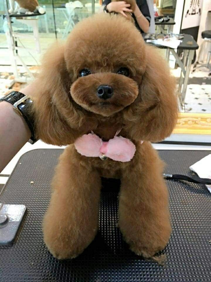 12 best pet grooming tubs images on pinterest pet grooming groomed by sze ting from animal arts academy at kensington park instagram t solutioingenieria Images