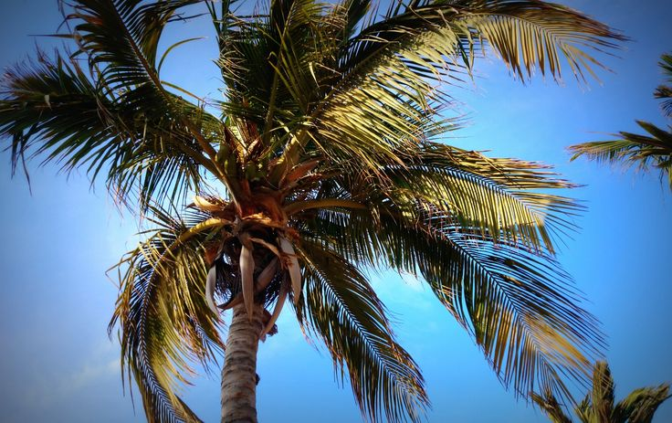 palm tree by Mel Graham on 500px