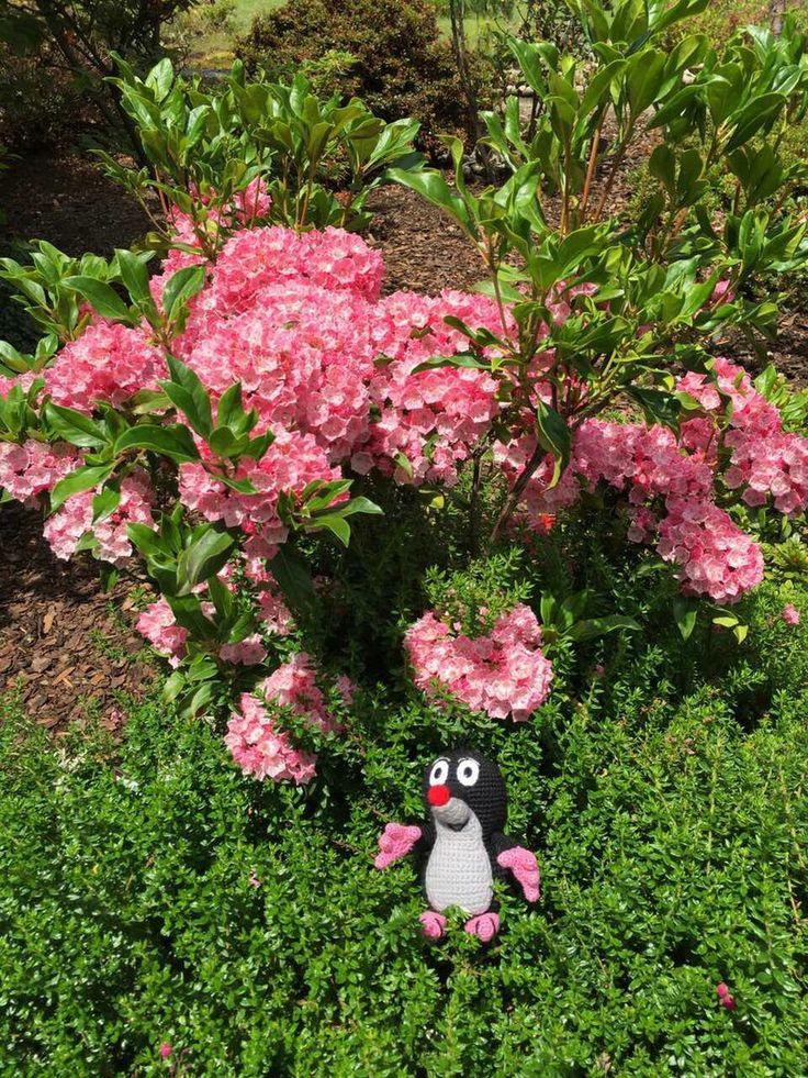 Рододендроны, Ботанический сад