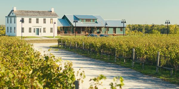 Ravine Vineyard » Event Facility, Niagara-on-the-Lake Winery Outdoor Wedding Venue