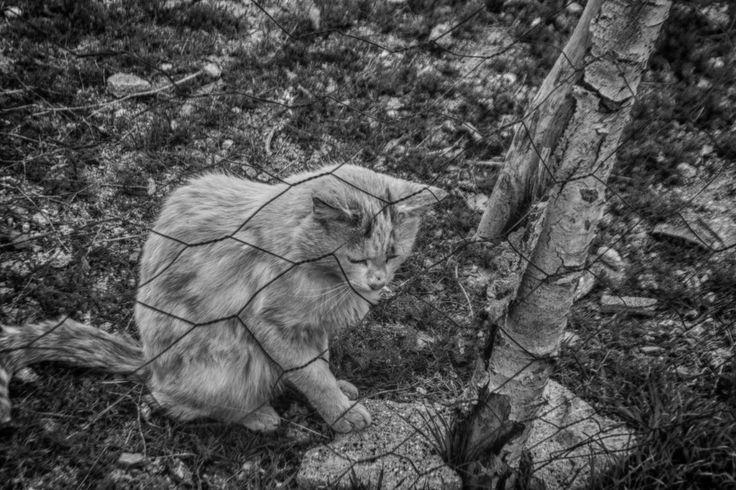 Hüzünlü, kedi, siyah-beyaz.