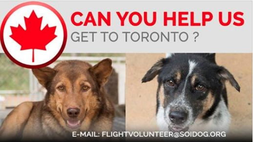 Flight volunteers wanted!  Can you help adopted Cougar and Raghat get to their forever homes.  If you are traveling FROM Thailand TO Toronto, on BOOKED tickets with Thai Airways, All Nippon Airways (ANA), China Airlines, Qatar, Korean Air, JAL, EVA, Lufthansa or KLM, please EMAIL jan@soidog-foundation.org for more information.  http://www.soidog.org/en/be-a-flight-volunteer