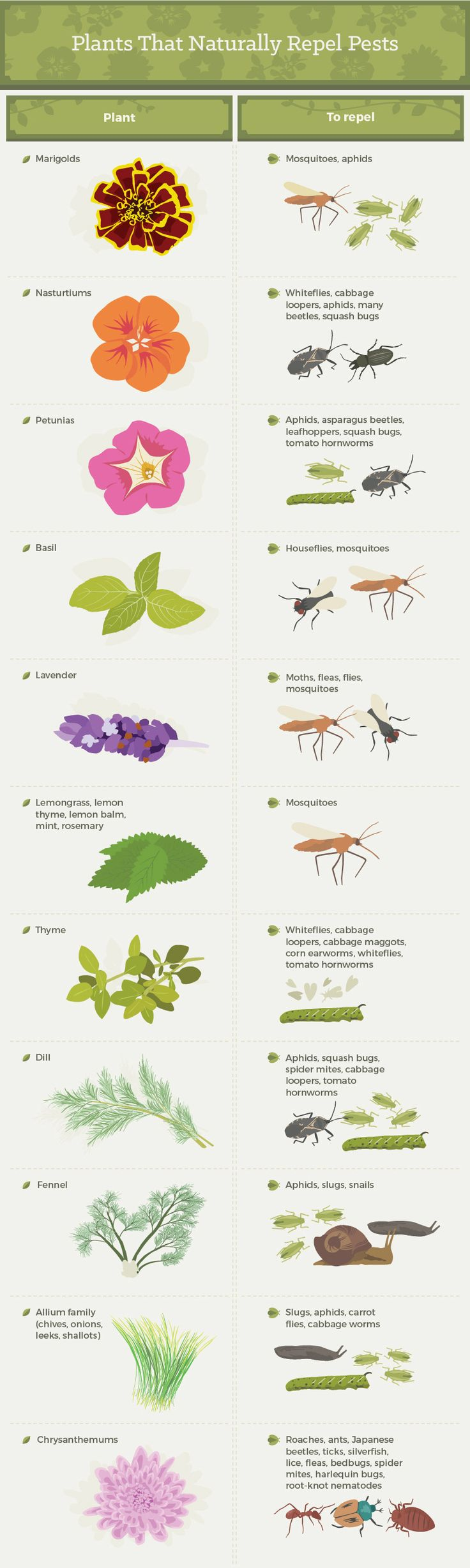 Plants that Naturally Repel Pests and other natural bug repellents.
