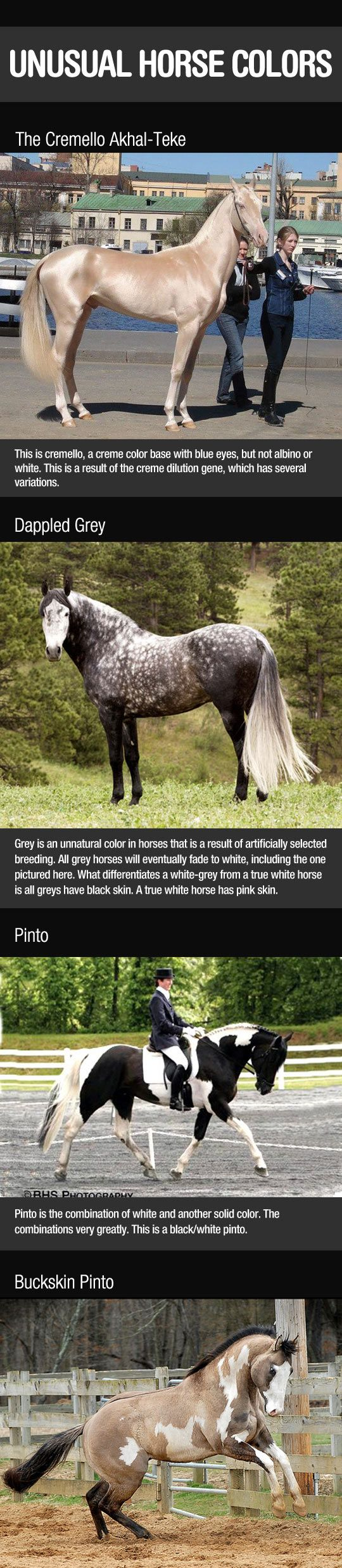 Breathtaking Horse Colors - Click picture once to see many more.