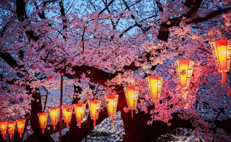 17 Fotos mágicas de la floración de los cerezos en Japón, por National Geographic | Bored Panda