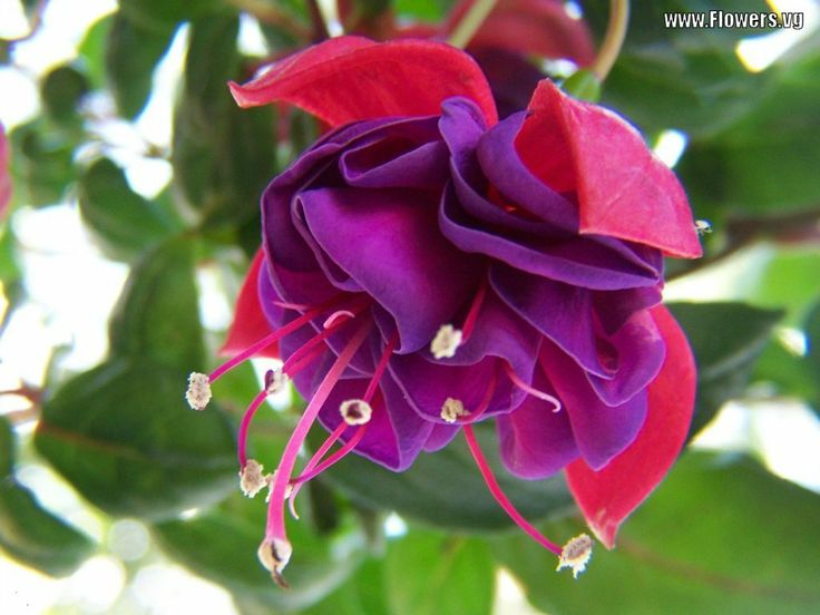Best the language of flowers images beautiful