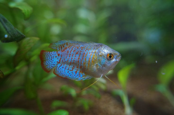 熱帯魚(とちぎ花センター)