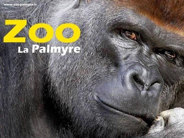 Zoo de La Palmyre, Parc Zoologique le plus visité de France. Au cœur de la Côte de Beauté et des plages de la Charente-Maritime, sur la pointe de la Coubre, à quelques dunes de Royan, se trouve l'un des parcs zoologiques les plus renommés d'Europe :...