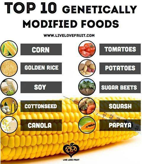 genetically modified organisms definition pdf