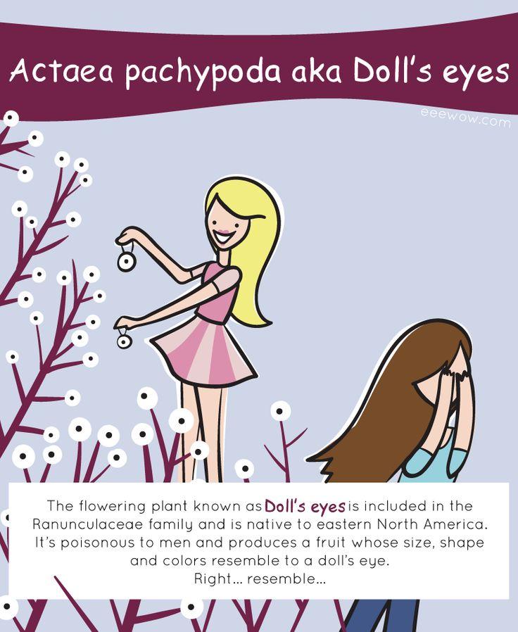 EEEW #007: ACTAEA PACHYPODA (aka Doll's eyes)