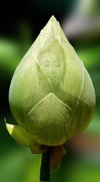 Green Buddha on a Lotus Flower Bud' I simply love this... awesome.