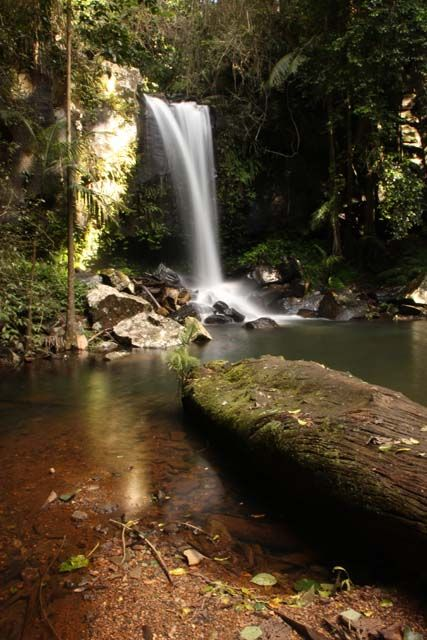 MY favourite place Curtis Falls at Tamborine Mountain Sth East Queensland