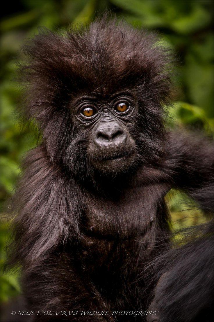 The Gorillas - It's My Life