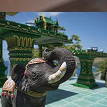 Vogue Eyewear Official Website -  - ELEPHANTS IN THAI LORE