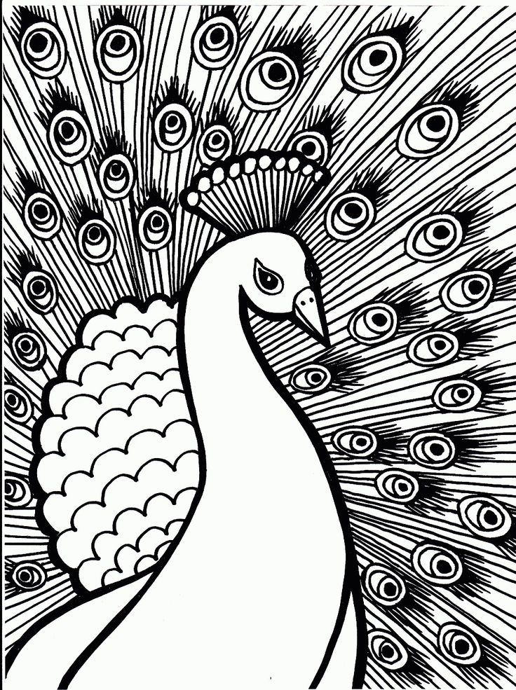 39 Best Animal Kingdom Coloring Book