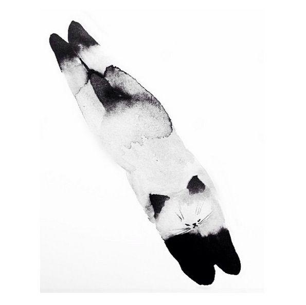 cat sketches - Laura McKellar