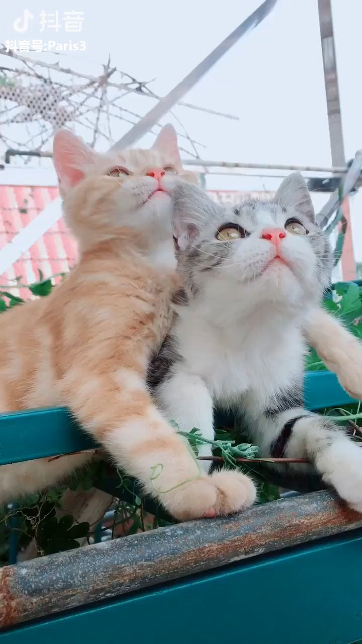 Awwww #Cute cats loving each other ♥ ♥