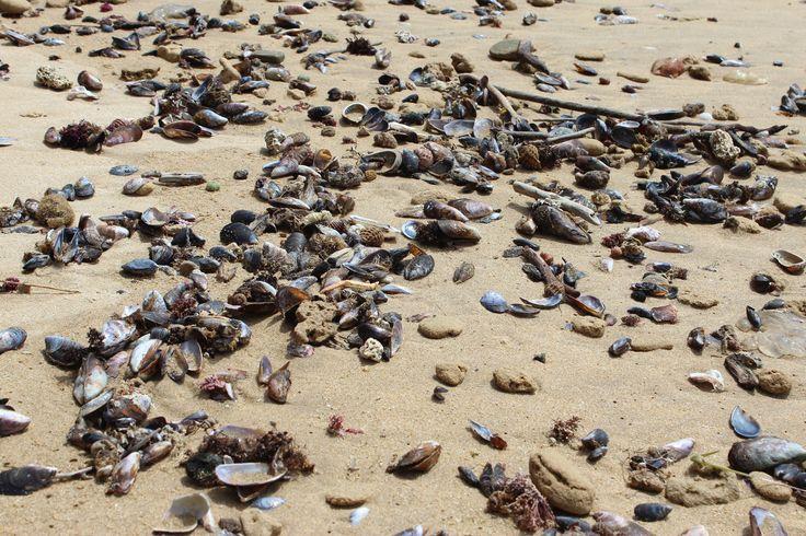 Litt anderledes sjell på stranda her.