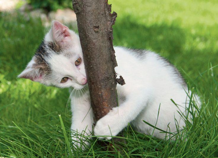 44 best images about les animaux du jardin on pinterest - Les animaux du jardin ...