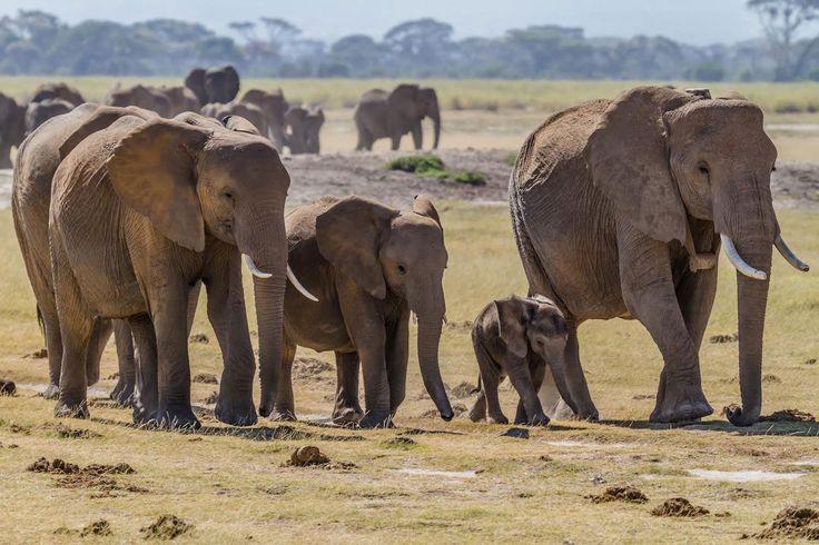 An African Adventure with Eco-Resorts Kenyan Safari